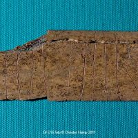 A cow rib with a runic inscription. (c) The Collection, Lincoln