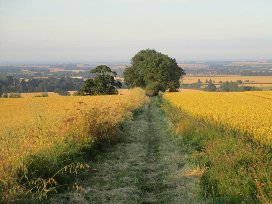 Bridleway near Hawerby and Beesby